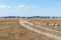 Schotterweg durch einen Trockenrasen stockbilder