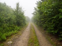 Schotterweg durch nebeligen Wald in Maine lizenzfreies stockfoto