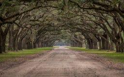 Schotterweg durch Tunnel von Live Oak Trees Stockfotografie