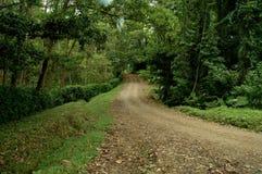 Schotterweg durch Wald stockfotos