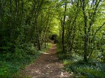 Schotterweg in einem Wald lizenzfreies stockfoto