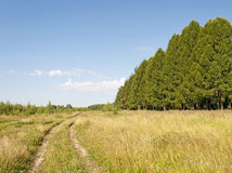 Schotterweg entlang dem Wald Lizenzfreie Stockbilder