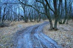 Schotterweg in gefrorenem Wald stockbild