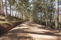 Schotterweg herauf den Hügel unter einer Baum-Überdachung Stockfotos