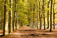 Schotterweg im Herbst, die Niederlande Lizenzfreies Stockfoto