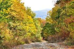Schotterweg im Herbstwald Lizenzfreies Stockfoto