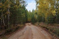 Schotterweg im Wald Stockfotografie