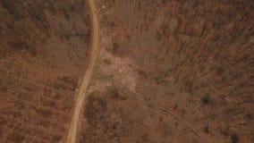 Schotterweg im Wald stock footage