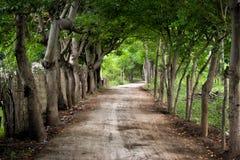 Schotterweg mit Bäumen Lizenzfreie Stockfotografie