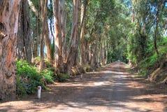 Schotterweg mit Bäumen längsseits lizenzfreie stockbilder