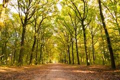 Schotterweg mit Baumstämmen im Herbst, die Niederlande Lizenzfreies Stockbild