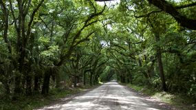 Schotterweg schattiert von Live Oaks in South Carolina Stockfoto
