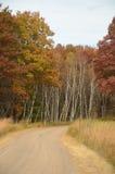 Schotterweg und FallTrees Stockbilder