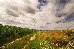 Schotterweg und Felder Stockfotografie