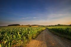 Schotterweg und Felder von Mais Stockfoto