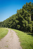 Schotterweg und Wald Lizenzfreies Stockbild