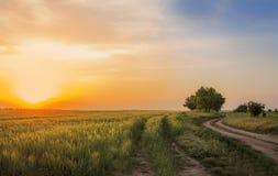 Schotterweg unter Feldern des Roggens Stockfotos