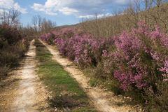 Schotterweg zwischen Heather Mauve Color Lizenzfreies Stockbild
