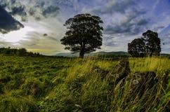 Schottische Hügel Stockbild