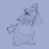Schottische Terrierskizze Stockfotografie