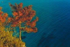 Schottischer Abhang Baum auf eine Klippe gegen das Meer Stockbilder