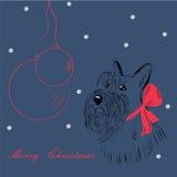 Schottischer Terrierhund Stockbilder