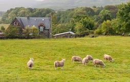 Schottisches Ackerland Stockfotos