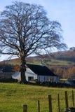 Schottisches Bauernhaus Stockbild