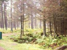 Schottisches Holz Lizenzfreies Stockbild