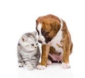 Schottisches Kätzchen und netter Welpe Getrennt auf weißem Hintergrund Lizenzfreie Stockfotos
