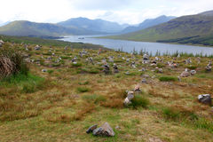 Schottland-Ende von Loch Shiel, Großbritannien Stockfotografie