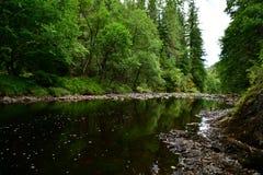 Schottland-Wälder und Fluss, Steine stockbild