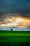 Schottland-Weizenfeldsonnenuntergang Stockfoto