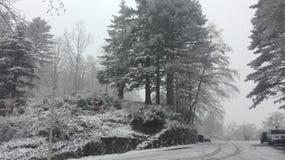 Schouwspel van aard onder de sneeuw wordt verrukt die royalty-vrije stock afbeelding