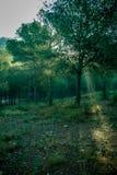 Schouwspel van licht en kleur stock foto's