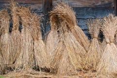 Schoven van tarwe stock afbeelding