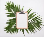 Schowka egzamin próbny na zielonych palmowych liściach zdjęcie royalty free