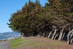 Schräg gelegene Bäume auf einer Seeküste Stockfotografie