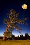 Schräg liegender Baum Stockfotos