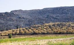 Schräg liegendes Feld brannte durch Feuer nahe trockenen Bäumen Stockfotos