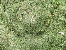Schräger Hintergrund des grünen Grases Stockfotografie