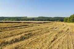 Schräges Feld des Weizens ernte Stockbilder