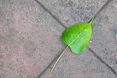 Schrägflächen-Blätter von Bodhi auf Boden Lizenzfreie Stockfotos