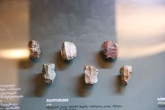 Schrapers bij biologie bij Georgisch Nationaal Museum - Tbilisi royalty-vrije stock afbeelding