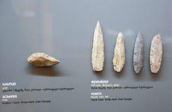Schrapers van Oude Staat bij biologie bij Georgisch Nationaal Museum - Tbilisi royalty-vrije stock foto's