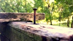Schraube in der Natur Stockbild