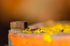 Schraube und gelbe Flechte Lizenzfreies Stockfoto