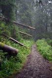 Schreckliche Spur im Wald Lizenzfreie Stockfotos