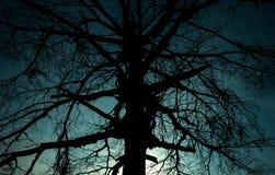 Schrecklicher Baum des Schattenbildes Stockbilder