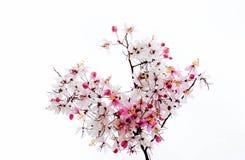 schreiben Sie und zacken Sie Blume aus Lizenzfreie Stockfotos